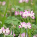 春の日に咲いている花