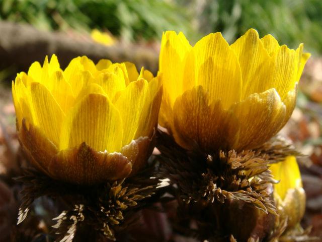 春に咲き始める花