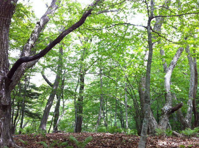 草木と自然