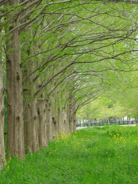 新緑の5月、木の小道