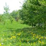 緑の木と芝生