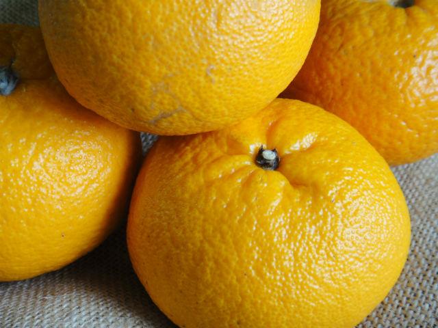 果物のハッサク