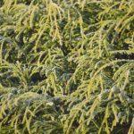木の葉に霜が降りた様子