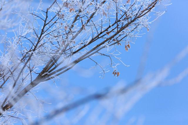 木の枝に初雪