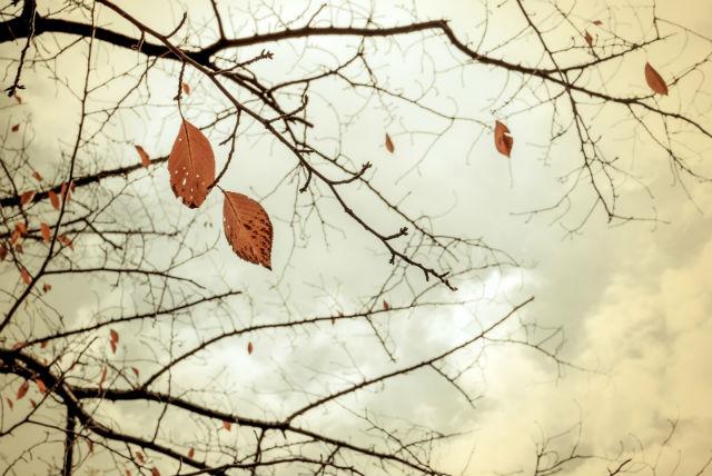 木の葉があとわずかな様子