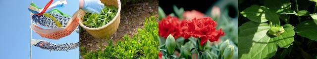 5月の年中行事・歳時記(鯉のぼり、茶摘み、カーネーション、葉の上の蛙)