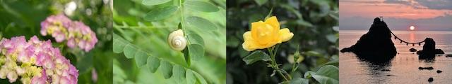 6月の年中行事・歳時記(あじさい、カタツムリ、黄色いバラ、夏至祭)