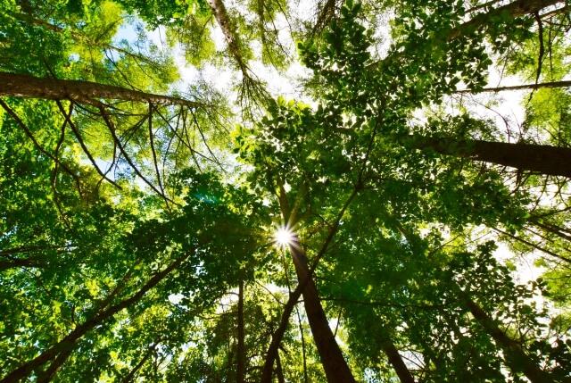 自然豊かな新緑の散歩道